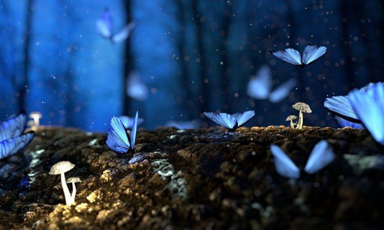pillangóhatás